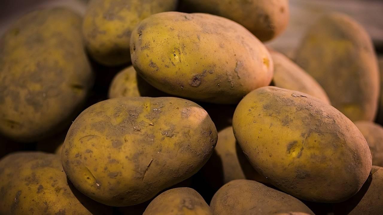 bintje kartofler